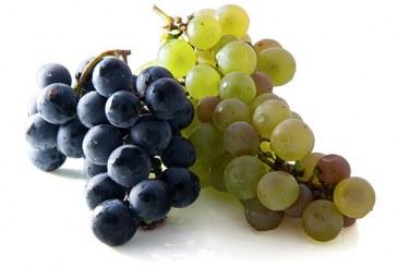 العنب ملك الفاكهة