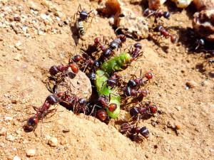 Ants-Eating