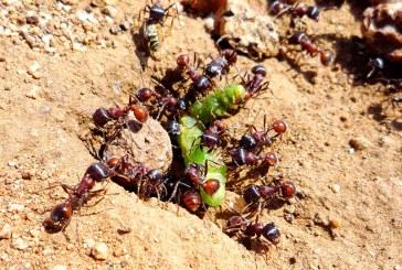 ماذا تعرف  عن حياة النمل